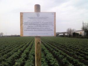 Acerra, il terreno di via degli Etruschi interdetto al pascolo con obbligo di analisi dei prodotti agricoli