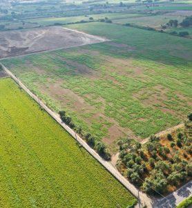 ecco come si presentano i terreni coltivati dopo lo scarico di finto compost, a chiazze
